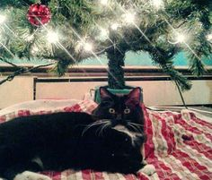 He seems surprised to be under the tree!