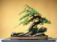 Beautiful larix.♦️More Pins Like This At FOSTERGINGER @ Pinterest ♦️