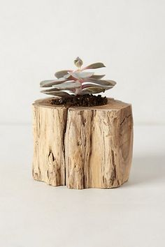 so cute for inside herbs! My kitchen window sill is calling for these! Tree Trunk Planter -#anthroregistry  anthropologie.com