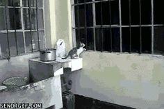 Window separates momma and kitten