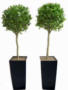 Pair of 4ft Bay Laurel Ball Artificial Topiary Trees- Unpotted | Topiary | Artificial Plants, Artificial Trees and Silk flowers | Evergreen