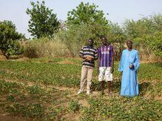 Jatropha farmers in Senegal