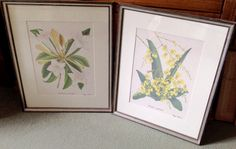A fabulous pair of botanical prints by the 19th century illustrator Peggy Packer. 'Oncidium Ampiaturn' and 'Port Landia Grandiflora'. 480mm x 570mm. £64.