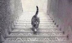An optical illusion photo of a cat recently caused frenzy over social media. The photo puzzled the viewers who couldn't decide whether the cat was going Eye Tricks, Brain Tricks, Mind Tricks, Illusions Mind, Cool Optical Illusions, Optical Illusions Brain Teasers, Funny Illusions, Cat Stairs, Illusion Pictures