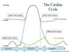 Cardiology II: Heart Sounds, Cardiac Output And Arterial Blood Pressure