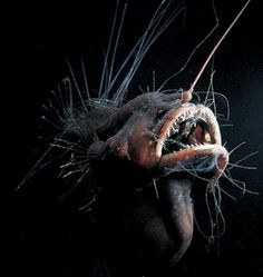 this monster looking fish is called the angler fish & lives in ocean waters of about 2000 ft deep, Many fish can change sex during the course of their lives. Others, especially rare deep-sea fish, have both male and female sex organs. Mariana Trench, Deep Sea Creatures, Weird Creatures, Underwater Creatures, Underwater Life, Fauna Marina, Unusual Animals, Creepy Animals