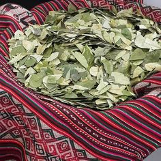 Hoja de Coca How To Dry Basil, Travel, Desk Styling, Growing Plants, Identity, Leaves, Colombia, Viajes, Destinations