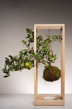 Plant Bondage - ash wood, porcelain. Plant Bondage reinterprets the planter into something elegant and fanciful. Drawing inspiration from the Japanese bonsai tradition of Kokedama, Farrah and Taylor create a self-sustaining structure, a minimalist bronze frame to hang a floating plant, with a wooden base and porcelain dish to soak its bound roots.
