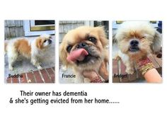 **These babies need a furever home.** Three dogs need homes