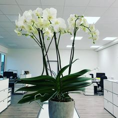 Danke Kejoo! #umzugsgeschenk #bürodeko #orchidee #martincolorfrankfurt #meinbüro Frankfurt, Glass Vase, Home Decor, Orchids, Thanks, Decoration Home, Room Decor, Home Interior Design, Home Decoration