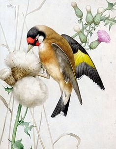 Goldfinch on thistle Vintage Bird Illustration, Illustration Art, Beautiful Birds, Animals Beautiful, High Hd Wallpaper, Goldfinch, Bird Patterns, Backyard Birds, Vintage Birds