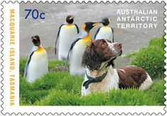 These stamps salute the hard work done by the dogs that saved the biodiversity…