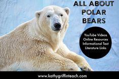 Polar Bear YouTube Videos, Books, and Activities