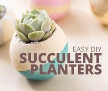 DIY Painted Planters with Succulents
