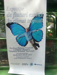 Fluturi tropicali