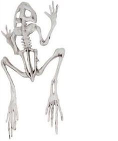 Frog Skeleton Bones Dead Halloween Prop Decoration Haunted House Bonez Spooky ** Click image for more details.