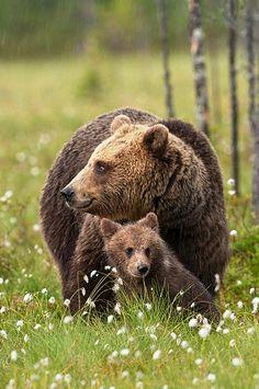 """""""Mother  Cub"""" by Brett Lewis"""