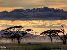 Serengeti National Park   National Geographic