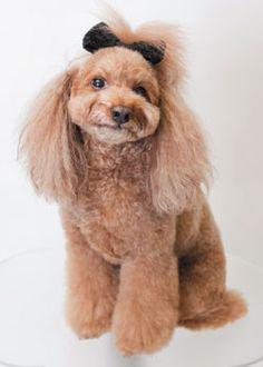 パーティー・スタイル --愛犬の友 ヘアスタイルカタログ--