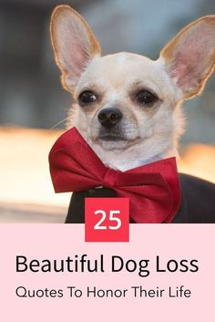 Losing a dog is a pain that nobody can describe. While there are no words to describe it, these 25 quotes are perfect for honoring your dogs beautiful life. #dogloss #dogs #dogquotes #doglover #foreverinourheart