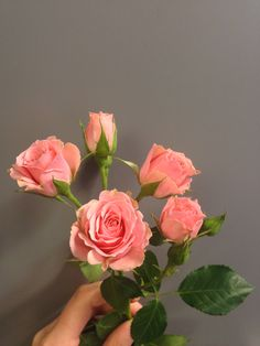 Rosa greinrose - Lydia Flowers, Plants, Decor, Pictures, Decoration, Plant, Decorating, Royal Icing Flowers, Flower