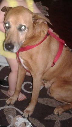 LOST DOG: 08/10/2017 - Anderson Mill, Austin, Texas, TX, United States. Ref#: L35063 - #CritterAlert #LostPet #LostDog #MissingDog