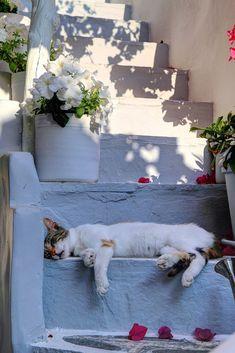 Siesta Time in Paros, Greece