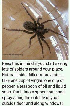 I know it's not a pet per-say; BUT Just in case: Natural Spider killer or preventer Handy Gadgets, Do It Yourself Camper, Spider Spray, Spider Killer, Get Rid Of Spiders, Huge Spiders, Insect Repellent, Spider Repellant, Wasp Deterrent