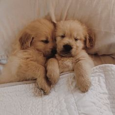 Golden Retriever Puppies Obsessed With Goldens - Cute Little Puppies, Cute Little Animals, Cute Dogs And Puppies, Cute Funny Animals, Baby Dogs, Doggies, Adorable Puppies, Baby Puppies, Baby Animals Pictures