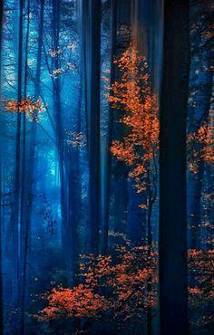 Brilliant autumn reds peeking through the forest's darkness.