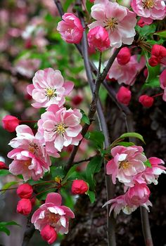 Beautiful Flowers Images, Beautiful Flowers Wallpapers, Flower Images, Blooming Trees, Flowering Trees, Types Of Flowers, Pretty Flowers, Spring Grove Cemetery, Corporate Flowers