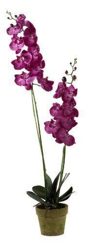 Creative Living 191734 110cm Matt Phalaenopsis Plant X 2 in Pot, Fuschia by Creative Living, http://www.amazon.ca/dp/B00BFO4M7M/ref=cm_sw_r_pi_dp_zVlitb142TRSK