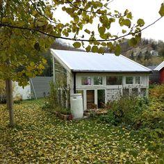 VÅRLI : Vinterforberedelser i hage og drivhus