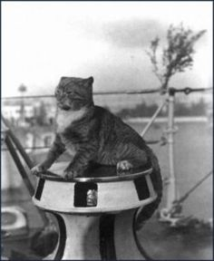 """The ship's cat on the Empress was named Emmy. She was said to have been a loyal orange tabby who had never once missed a voyage. But shortly before the liner's final voyage, the cat repeatedly tried to leave the ship before its departure on 28 May 1914. The crew could not coax her aboard and the Empress departed without her. It was reported that Emmy watched the ship sail away from Quebec City sitting on the roof of the shed at Pier 27, which would later become a place for the dead pulled…"