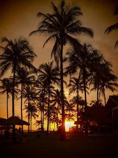 ...a palm tree sunset....