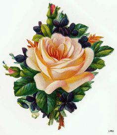 Vintage Rose Scrap ~ LAMINAS... Y TRABAJOS CON FLORES (pág. 184) | Aprender manualidades es facilisimo.com