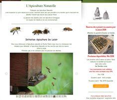 Apiculteur 49 est une exploitation apicole qui élève des abeilles Buckfast dans des ruches Warré et dans des ruches TBH (= ruche horizontale).
