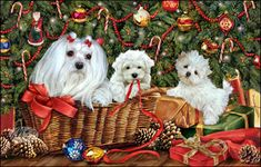 "Maltese Christmas cards are 8 1/2"" x 5 1/2"" and come in packages of 12 cards. One design per package. All designs include envelopes, your personal message, and choice of greeting. Select the greeting of your choice from the drop-down menu above. Add your personal message to the Comments box during checkout."