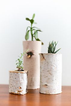 Hollow Log Planters