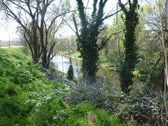 Detalle de la frondosa vegetación junto al río