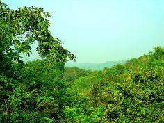 Eturnagaram Wildlife Sanctuary - Warangal, Telangana, India