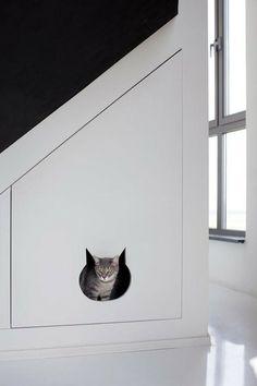 Dissimulez la caisse de votre chat et choisissez une litière naturelle compostable