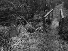 Bridge My Photos, Bridge, Plants, Image, Scouts, Bridges, Plant, Planets, Bro