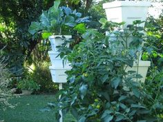 Hoe and Shovel: Vertical Gardening: How Tall Can You Grow