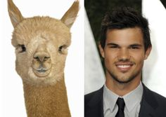 9 Cute Animals and Their Celeb Lookalikes
