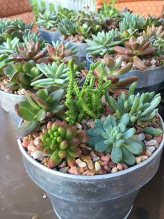 Succulent center pieces