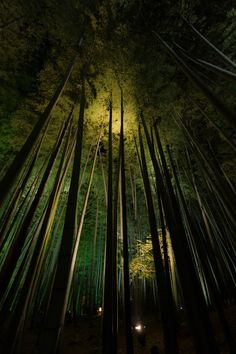 Banboo forest in Kodaiji-temple