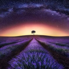 Lavender field and Milk Way  Absolutely stunning ✨ Pic by Jesús M. Garcia #naturalplease#tourism#wanderlust#travel#traveling#instatraveling#turismo#viagem#travelgram#vacation#photooftheday#picoftheday#photography#cool#awesome#amazing#destination#inspo#photo#landscape#panorama#lavender#field#milkway#sky#star#france#europe#provence#night