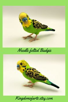 Incredibly realistic budgie will be perfect gift for pet owners or home decoration. Parrot is made of high quality merino wool. Eyes, nose and paws are made of Polymer clay. Parrot Toys, Parrot Bird, Parakeets, Parrots, Parakeet Toys, Felt Gifts, Outdoor Couch, Handmade Market, Waves