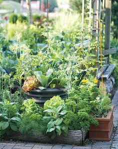 edible edgings - parsley, sage and alpine strawberries